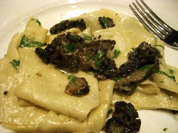 Papardelle with morels and thyme